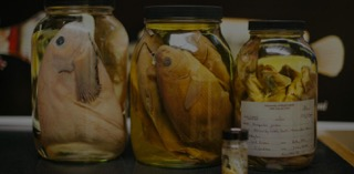 fish-specimens-in-jars