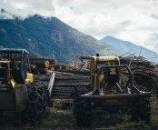 landscape-livelihood-logging-faith-bernstein